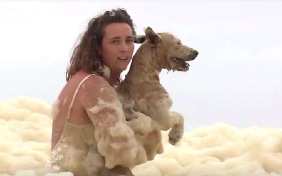 Hazel the dog rescued from a rising tide of sea foam on the Gold Coast -  Latest News Post