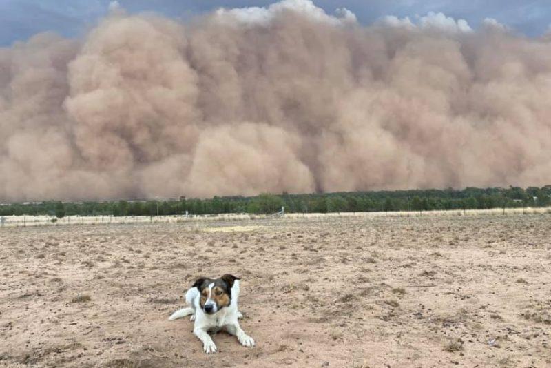 nsw dust storm