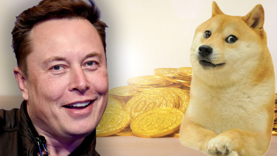 dog coins vs bitcoins definition