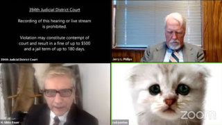 zoom court hearing cat lawyer