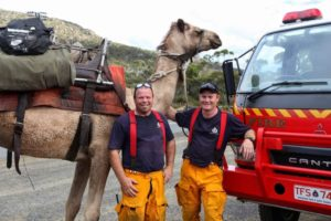 camels tasmania