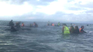 whale stranding nz