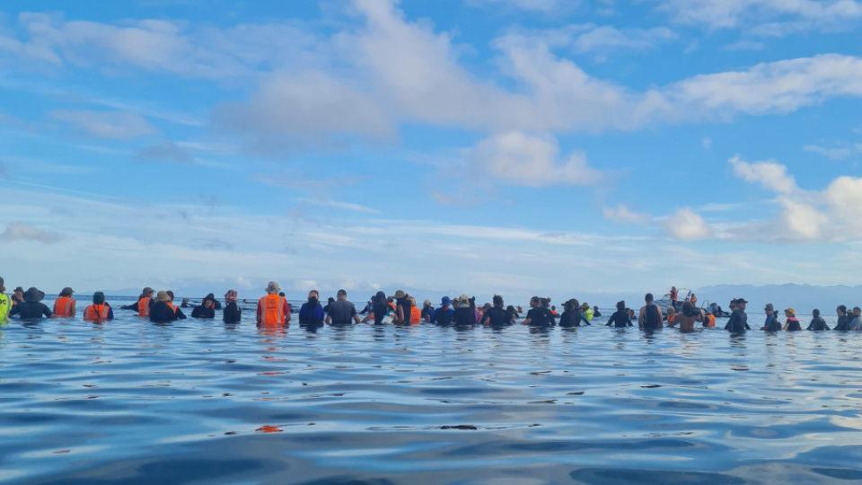 whale-stranding