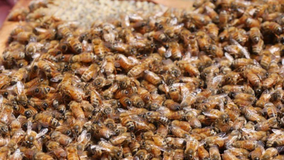 bees honey la nina australia