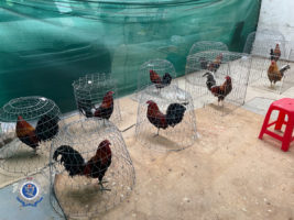 roosters seized sydney