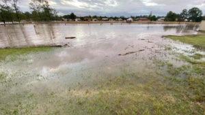 nsw floods spiders