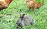 View Of Rabbit Sitting On Grassy Field