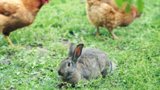 View Of Rabbit Sitting On Grassy Field