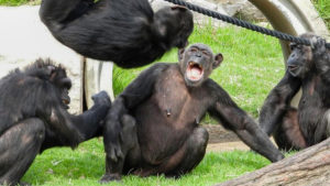 sydney zoo lockdown