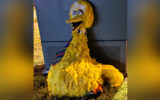 big bird stolen adelaide