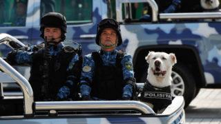 Turkmenistan dogs