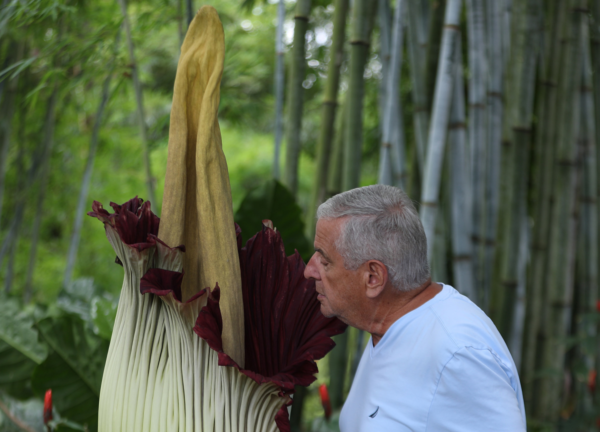 Man smells a corpse flower