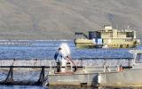 tassal gas leak