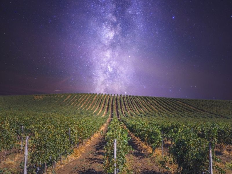 The Shiraz Republic - Wine under the stars
