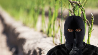 Asparagus theft at farm in Germany