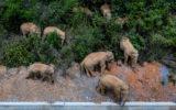elephants china