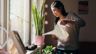 Gardening helps mental health help in coronavirus times