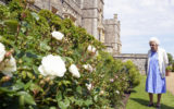 queen philip birthday rose