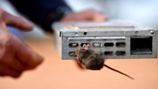 mouse plague jail nsw