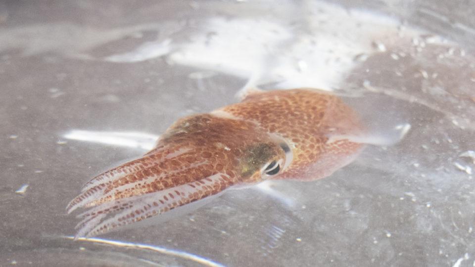 squid-space