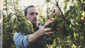A fruit picker
