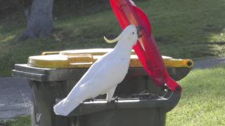 cockatoo garbage bin