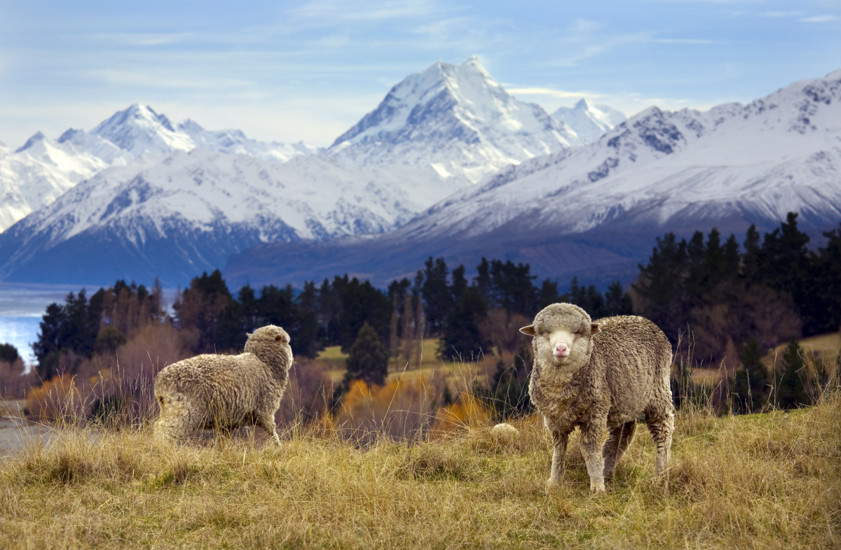 New Zealand best place to survive the end of the world