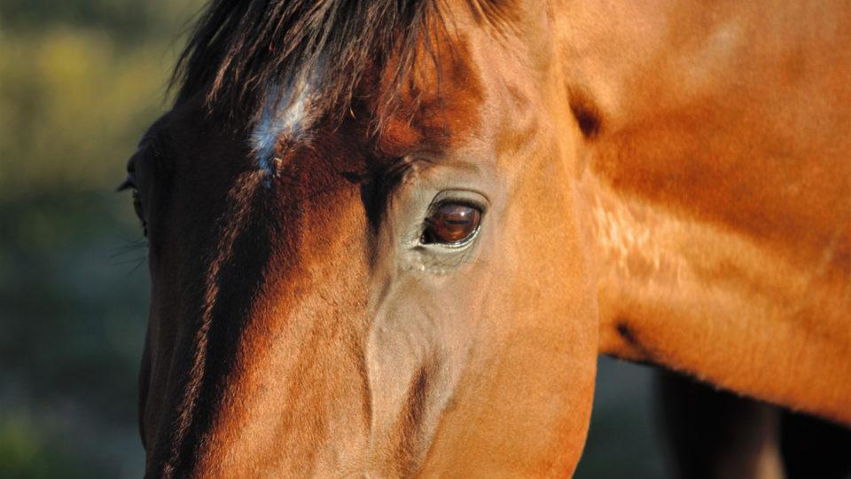 longreach horses shot