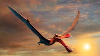 dinosaur queensland