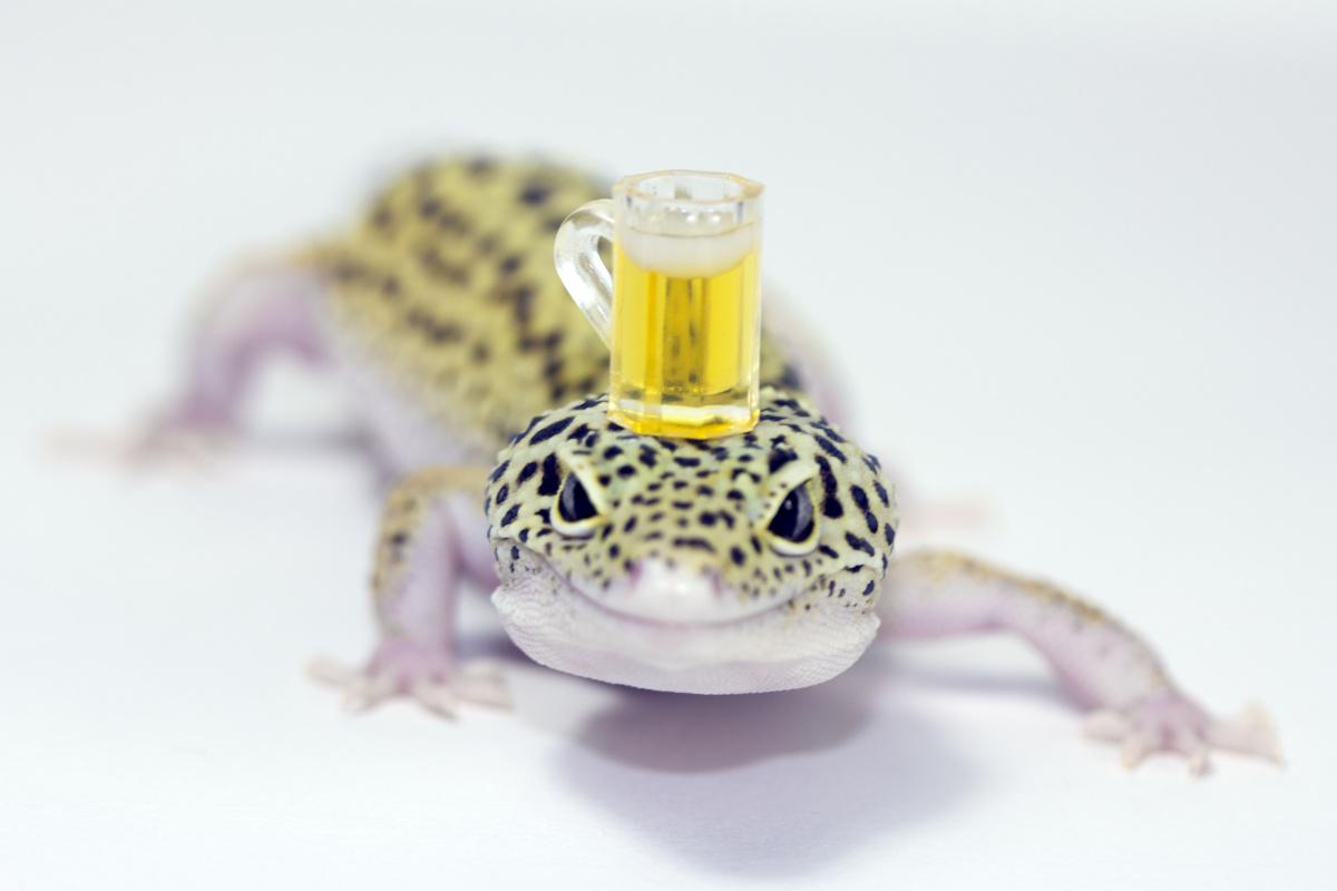 Lizard drinking slang term