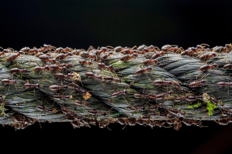 'Small Big Migration' captures a moment in the life of a population of soldier termites as they migrate to ensure survivorship and reproduction of the colony