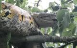 python british garden