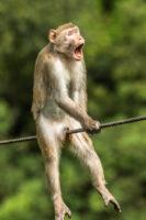 Comedy wildlife photograph awards