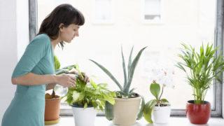 Consumer rights indoor plants