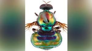 rupal fly