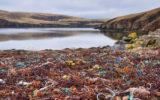 world coast litter hotspots