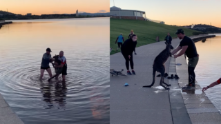 kangaroo rescue Canberra